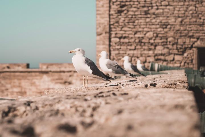 Meet Essaouira